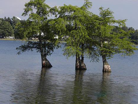Three Trees by Cim Paddock