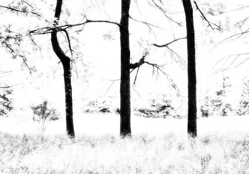 Three Trees by Heather Bridenstine