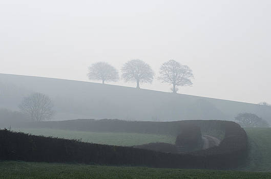 Three trees in the mist by Pete Hemington