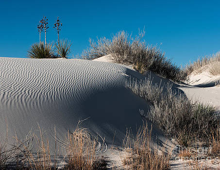 Three Yuccas on the Dune by Sherry Davis