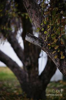 Linda Knorr Shafer - Through Autumn