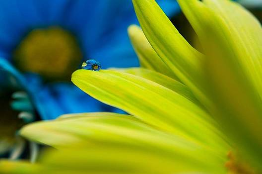 Through Drop by Naveed Ahmed