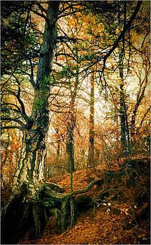 Through the Island Forest by Douglas MooreZart
