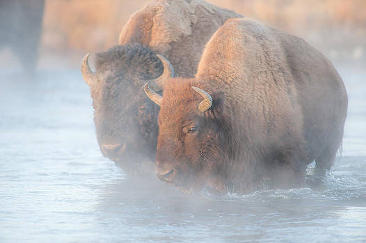Through The Steaming River by Randy Giesbrecht