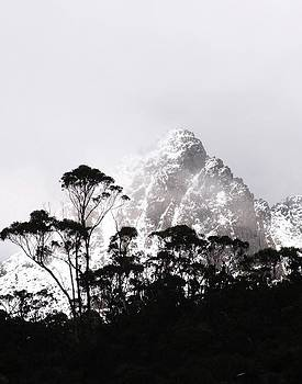 Through The Trees Come Mountains by Lee Stickels