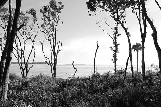 Through the Trees by Thomas Leon