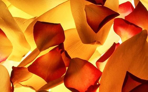 Thrown Petals by Karen M Blankenship