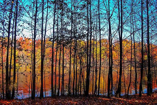 Thru Trees Landscape by Andrew Kazmierski