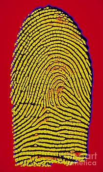 Scott Camazine - Thumbprint