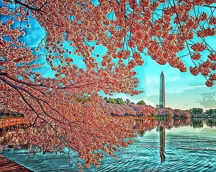Tidal Basin Cherry Blossoms by Boyd Alexander