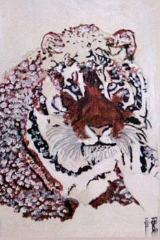 Tiger in the Snow by De Beall