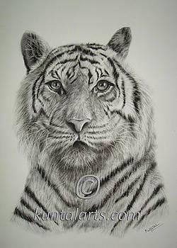 Tiger by Kuntal Chaudhuri