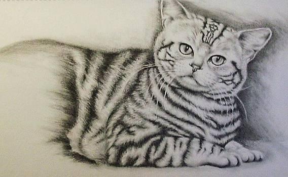 Tiger by Lisa Marie Szkolnik
