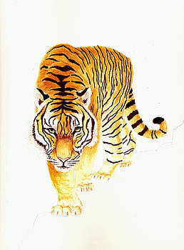 Tiger by Michael Vigliotti