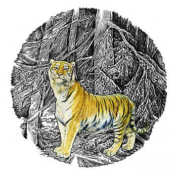 Natalie Berman - Tiger