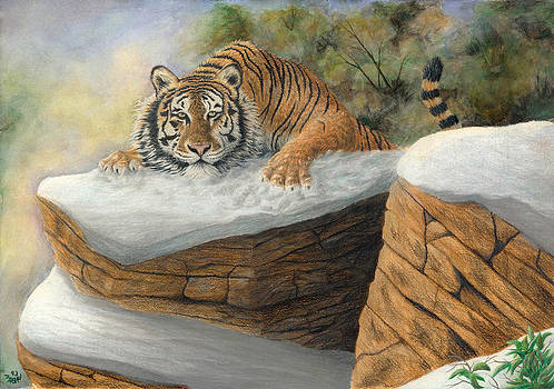 Tiger On Rock by Marshall Bannister