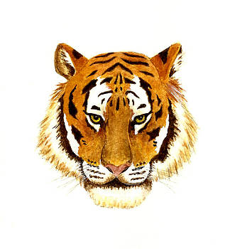 Tiger Portrait by Michael Vigliotti