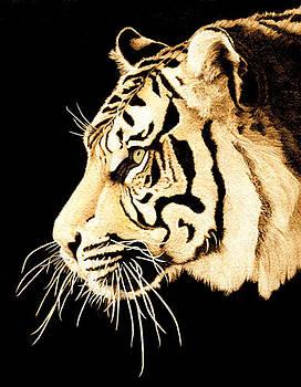 Tiger Profile by Cate McCauley
