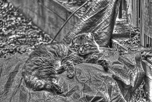 Tiger reclining BW by Andy Lawless