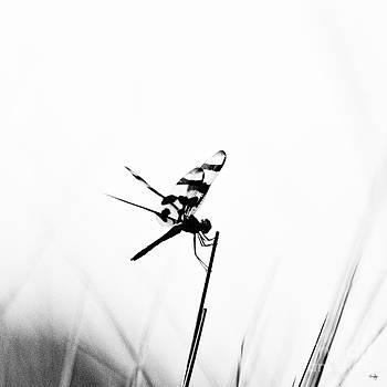 Scott Pellegrin - Tiger Stripes