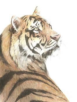 Tiger study by Meagan  Visser