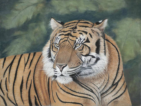 Tiger by Teresa LeClerc