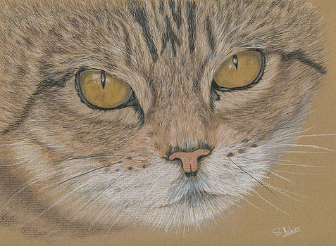 Tigger by Sue Arber