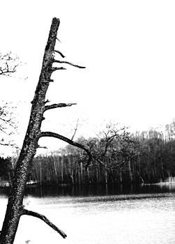 Tilted Tree by Nicholas Kjellner