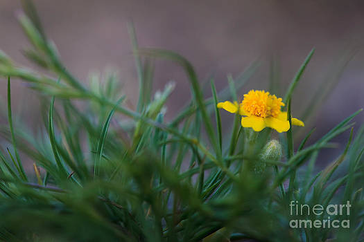 Tiny Belly Flower by Terry Ellis