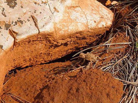 Tiny Desert Dinosaur by Donna Jackson