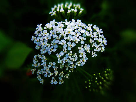 Tiny flowers by Anita Reynolds