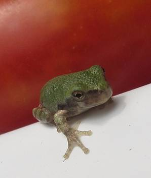Tiny Frog by Christine Bradley