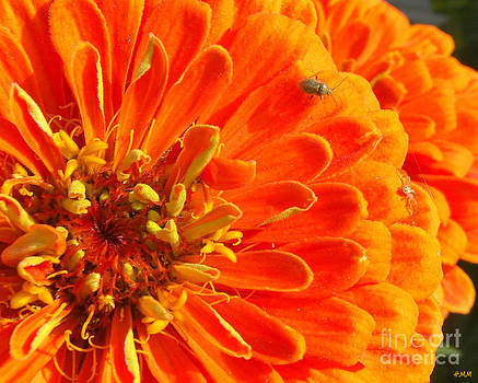 Tiny On Orange by Heidi Manly