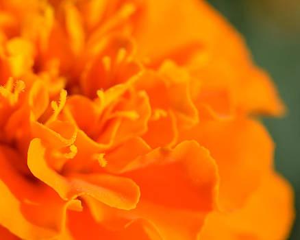 Tiny Orange  by Neil Todd