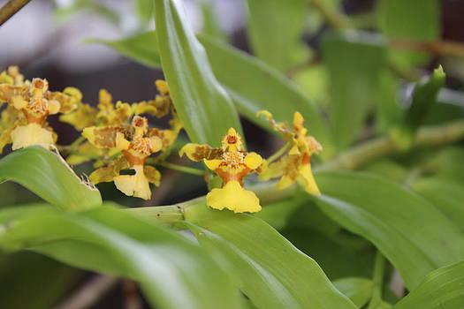 Tiny Orchid by Mark Perez