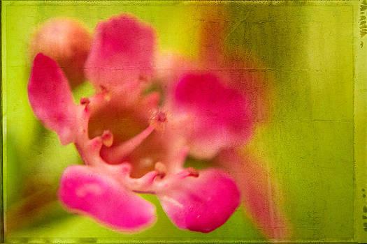 Tiny Pink by Takeshi Okada