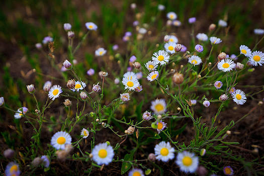 Tiny Wildflowers by Nick Oman