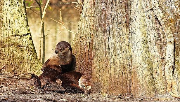 Paulette Thomas - Tired River Otters
