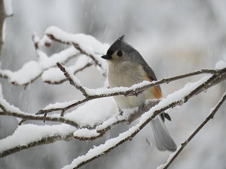 Titmouse by Devin Stone