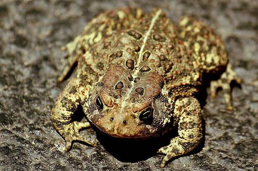 Rosanne Jordan - Toad You So