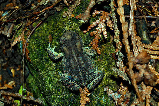Toadly Laxed by Wendell Ducharme Jr