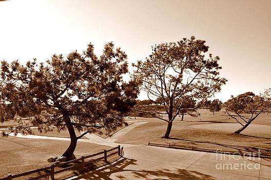 Torrey Pines Afternoon  2 by Tanya  Searcy