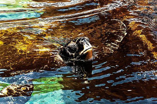 Tortila by Yevgeni Kacnelson
