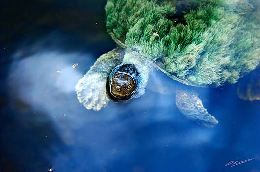 Russ Brown - Tortoise
