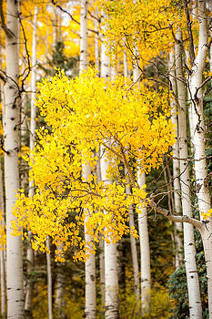 Touch Of Fall by Randy Giesbrecht