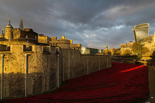 Tower of London and moat filled with poppies by Matthew Bruce