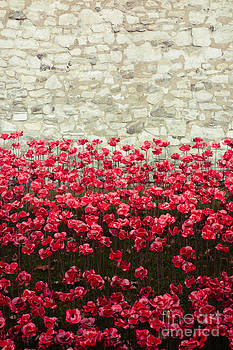 Tower Poppies 04A by Pete Edmunds