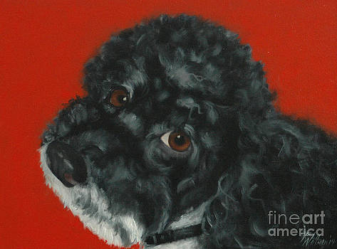 Toy Poodle by Pet Whimsy  Portraits