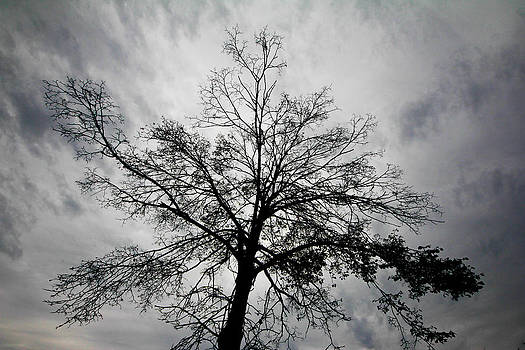 Trader's Tree by Graham Hayward