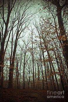 Trail Blazers by Waverley Dixon